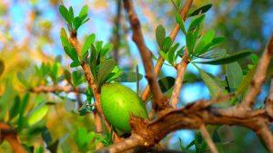 L'huile d'argan est-elle une crème anti-rides naturelle ?